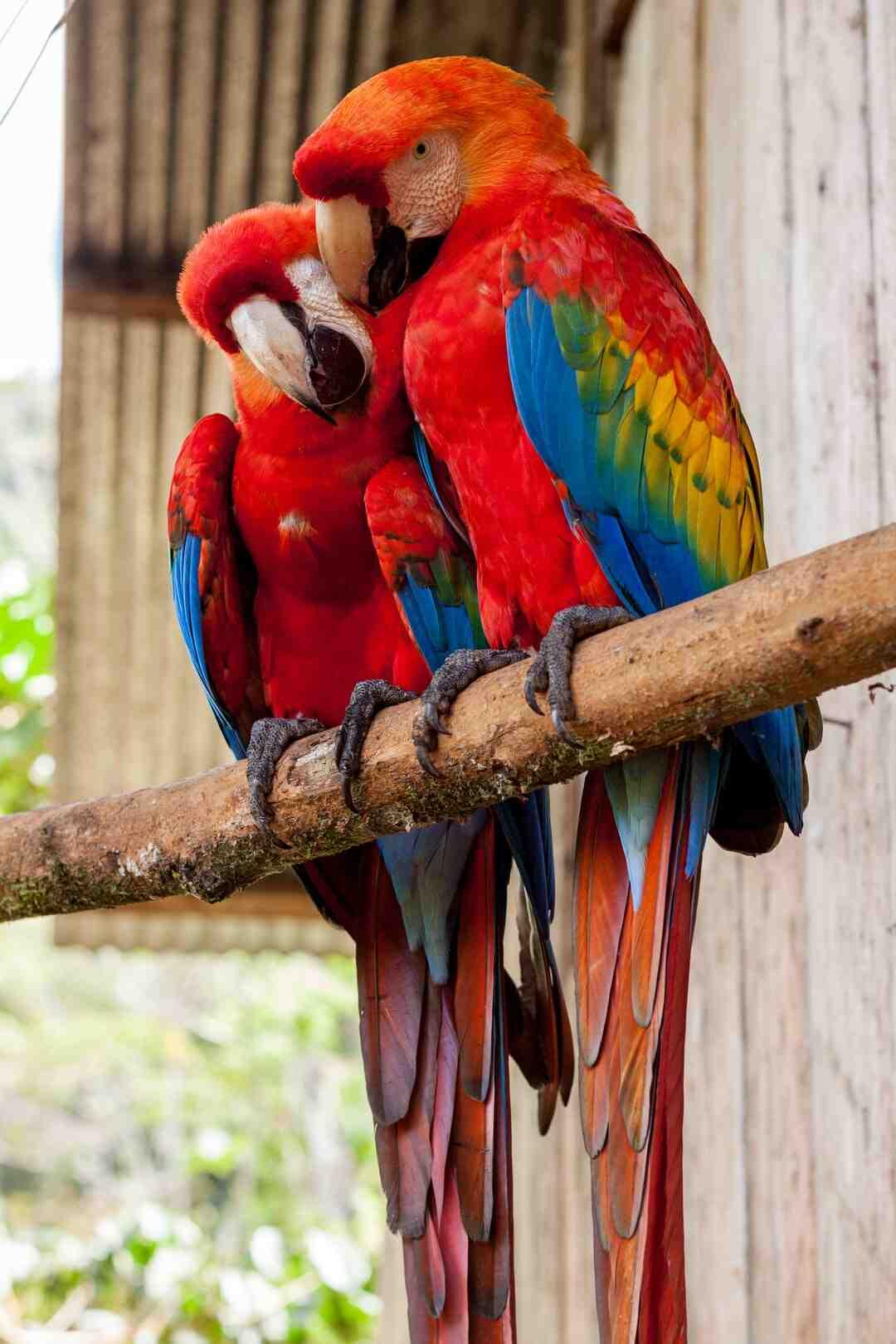 Comment dresser un perroquet