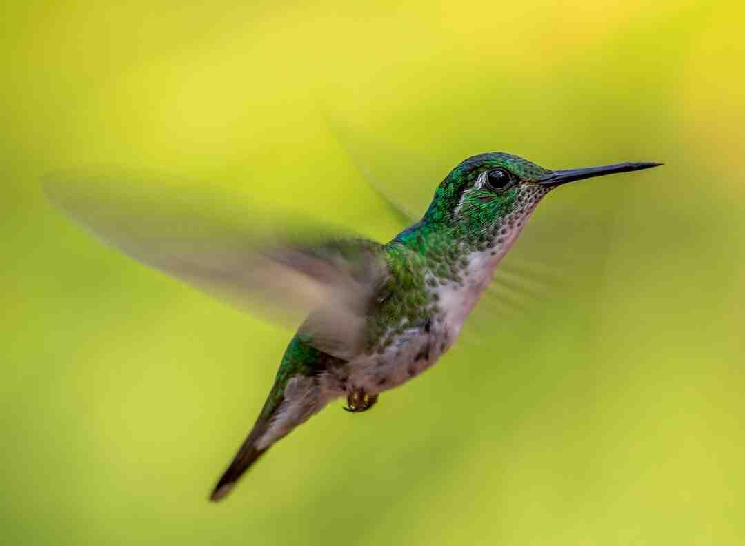 Comment effrayer les oiseaux au jardin