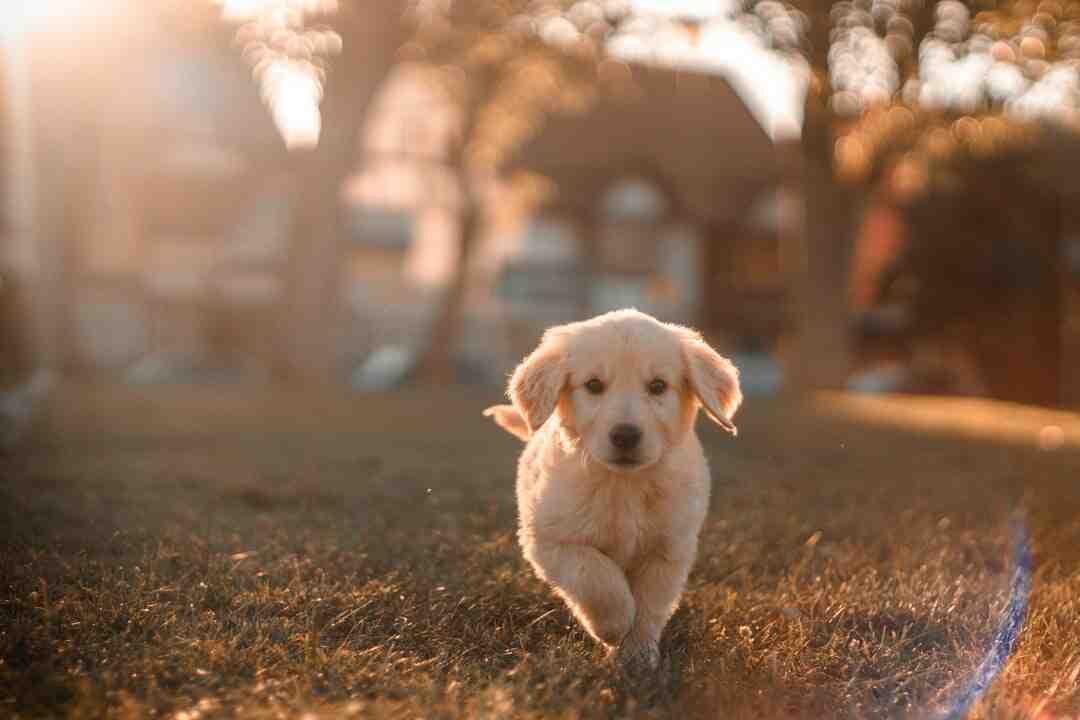 Comment entrainer son chien à uriner à l'extérieur