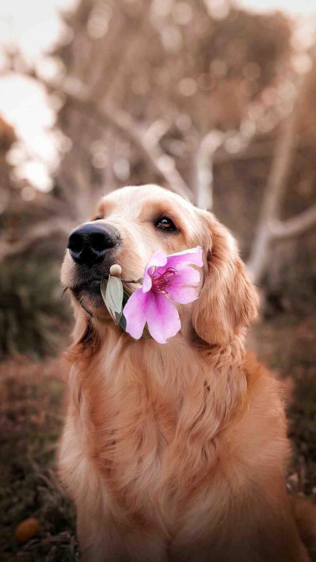 Comment entretenir son chien