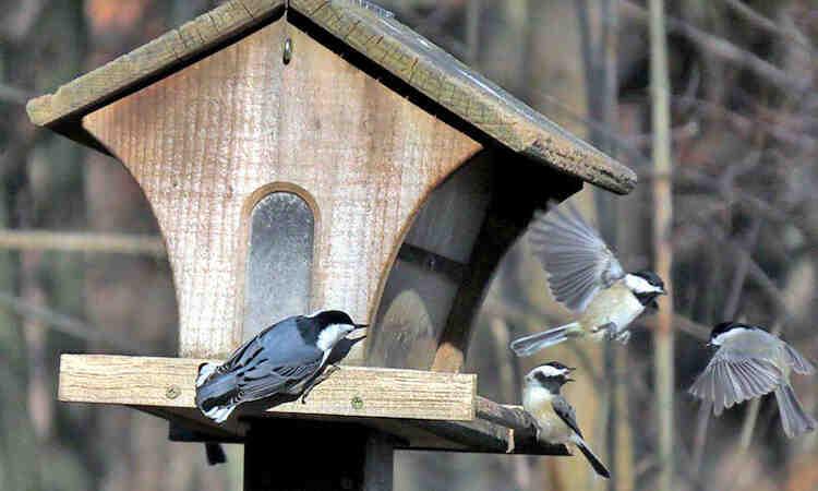 Comment les oiseaux trouvent les mangeoires