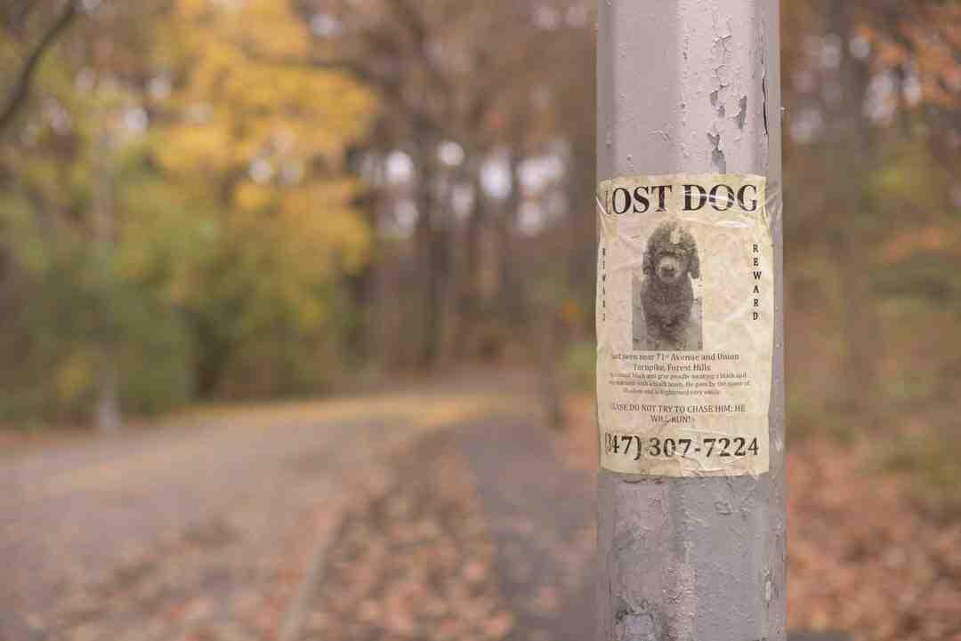 Comment retrouver chien perdu pucé