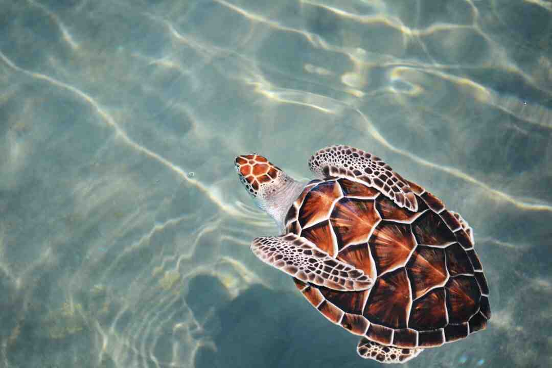 Comment s'occuper d'une tortue
